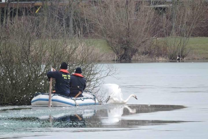 Am Montag hatten Kameraden der Feuerwehr versucht, dem festgefrorenen Schwan zu helfen. Das Tier befreite sich aus dem Eis, einfangen ließ es sich nicht.