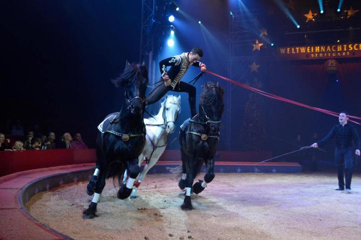 Ivan Knie vom Circus Knie mit seinen Pferden.