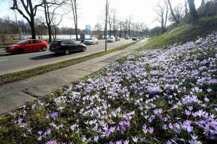 Viel Verkehr auf der Schlossteichstraße. Mit Tempo 30 soll das  Naherholungsgebiet rund um den Schlossteich aufgewertet werden.