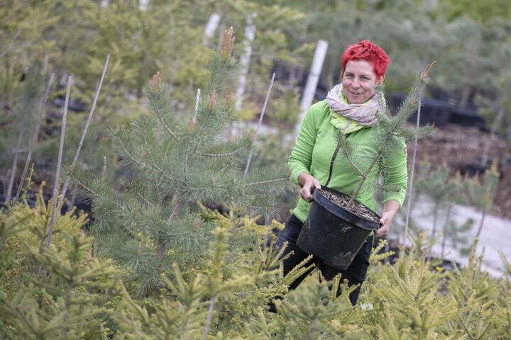 Ihre Bäumchen kommen auf den Neumarkt: Baumschulen-Chefin Yvonne Kreiser (42) in mitten ihrer Zöglinge.