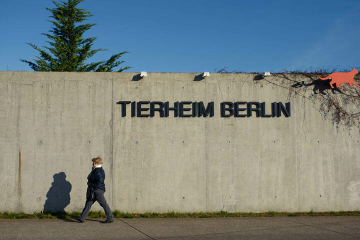 Eine Frau besucht vor dem Eingangsbereich des Tierheims in Berlin-Falkenberg.