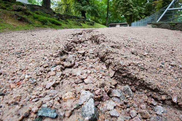 Das Wasser hat tiefe Rinnen in die Erde gegraben. Der Tierpark Hirschfeld wurde von Starkregen und Sturm heimgesucht.