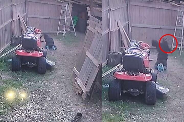 Das Video der Überwachungskamera lieferte den Beweis. Rechts: Der rot umkreiste Hund, bevor er zu Boden geschleudert wurde.