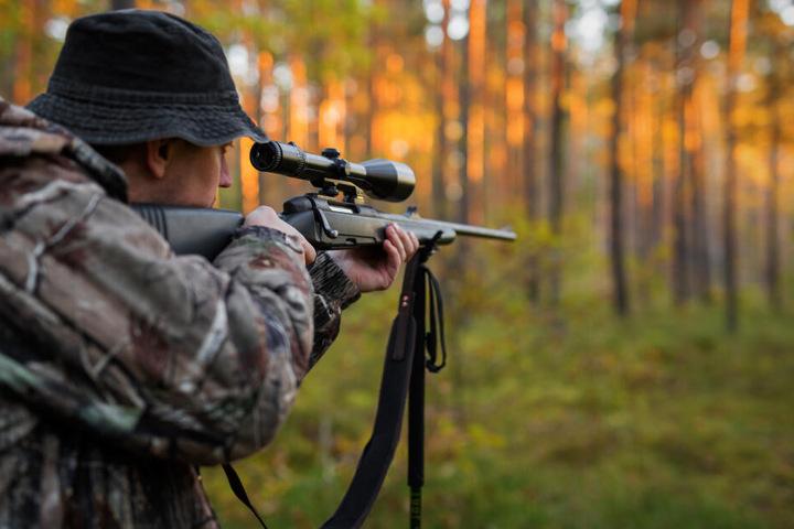 Sachsen verschärft die Gangart gegen Problemwölfe. Töten dürfen sie aber nur spezialisierte Jäger mit Erlaubnis der Behörden.