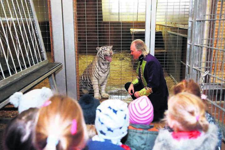 Mit gebührendem Abstand bestaunen die Kita-Knirpse André Sarrasanis weißen Tiger.
