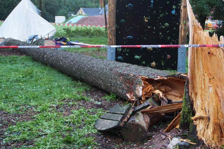 Der Baum wurde offenbar von einem Blitz getroffen.