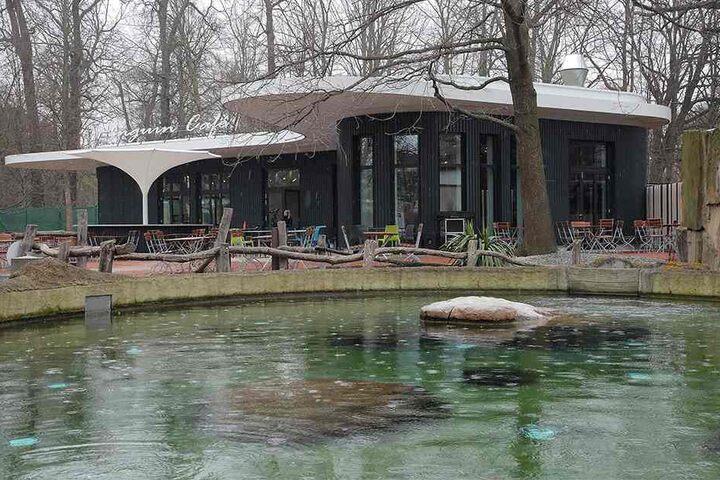 Das Pinguin-Cafe öffnet seine Türen am Samstag für alle Zoobesucher.