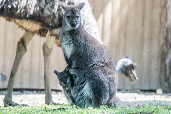 Im Tiergarten Straubing gilt manchmal auch: Wer beobachtet hier eigentlich wen? (Archivbild)
