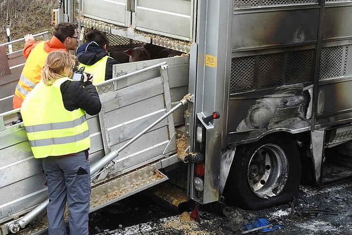 Die Schweine wurden bei dem Feuer nicht verletzt.