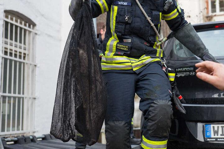 Zwischen einigen Mülltonnen versteckt ging der Waschbär den Einsatzkräften dann ins Netz.