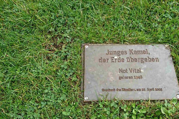Im Kunsthallenpark in Bielefeld verrottet unter der Erde ein echtes, aber totes Kamel.