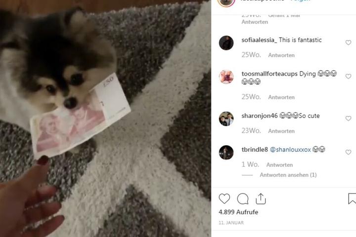 Der kleine Hund hat sogar einen eigenen Instagram-Account!