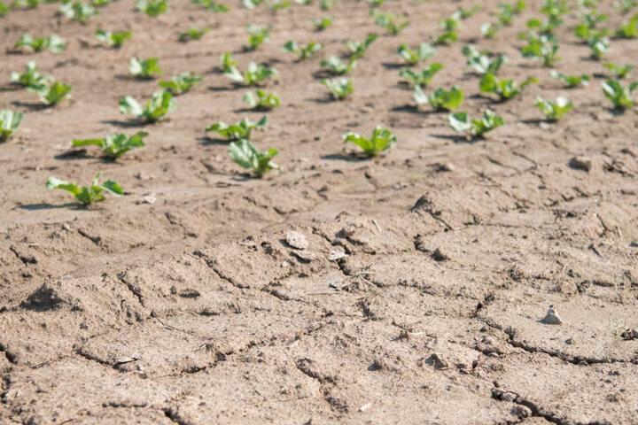 Die Trockenheit machte auch den Landwirten dieses Jahr zu schaffen.