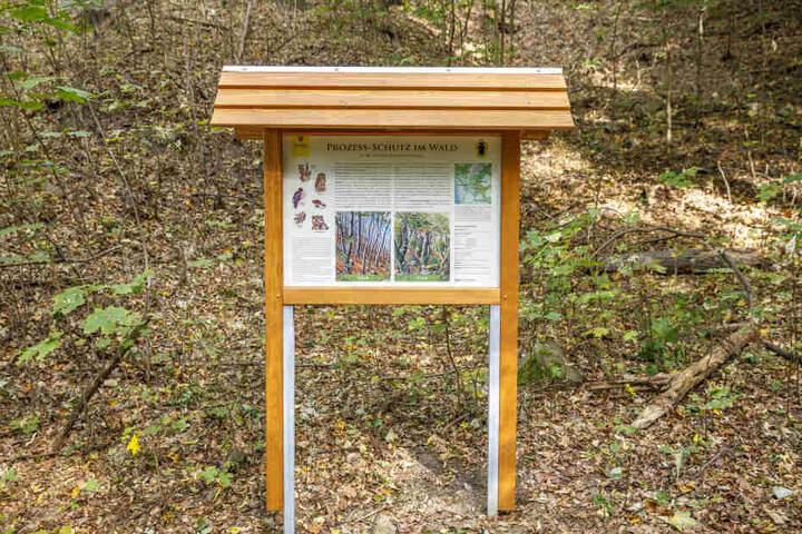 Ein Schild (nahe der Straße An der Kucksche) klärt über Dresdens ersten Urwald auf. Es wurde am einzigen Weg angebracht, der durch den Wald führt.