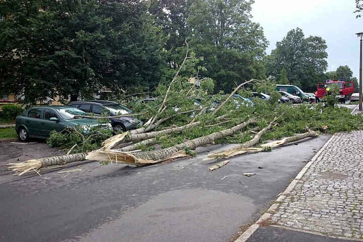 In der Ikrutsker Straße krachte ein Baum auf mehrere Autos.