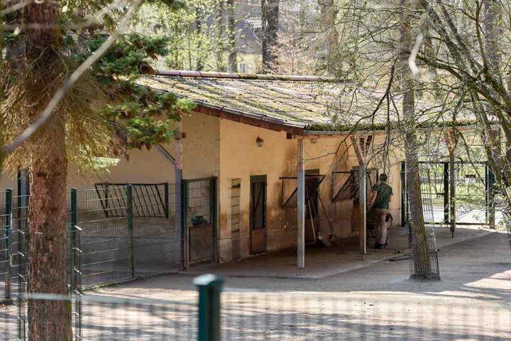 Der Zahn der Zeit hat an den Anlagen im Chemnitzer Tierpark genagt. Auch  betroffen ist das Gehege der Przewalski-Pferde.