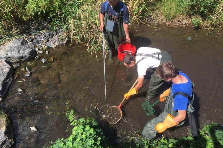Mitarbeiter und ehrenamtliche Helfer des Anglerverbandes sind seit Tagen in Sachsens Gewässern im Not-Einsatz.