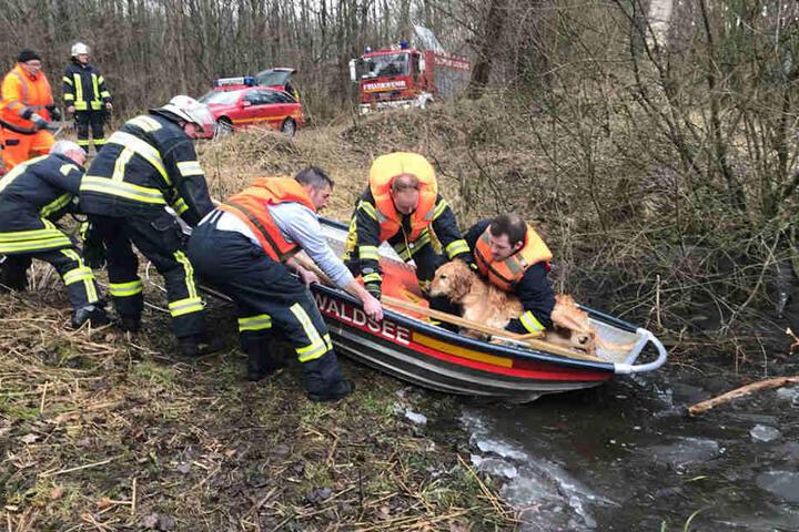 Durchgefroren aber lebendig: Die Helden der Feuerwehr Bad Waldsee haben den Hund aus dem eisigen Wasser gerettet.