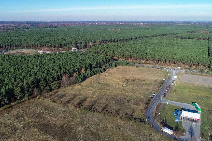 In dem riesigen Waldgebiet plant Tesla den Bau einer Gigafactory.