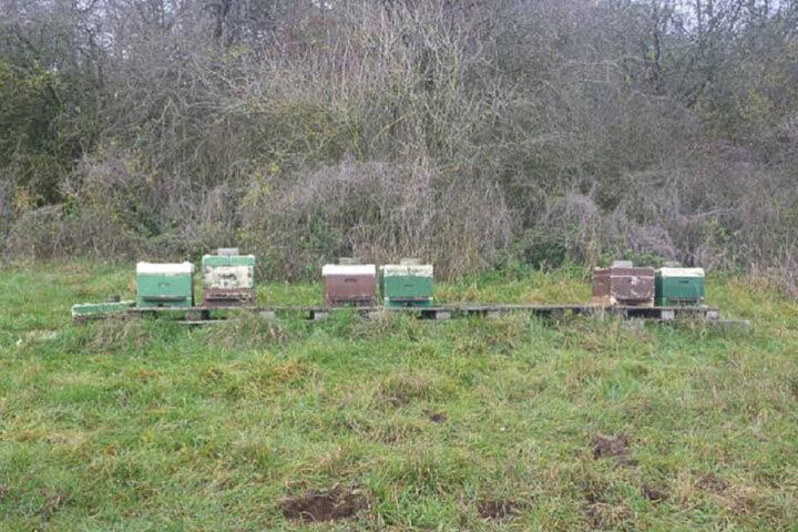 Die Bienenstöcke stehen auf einer frei zugänglichen Wiese.