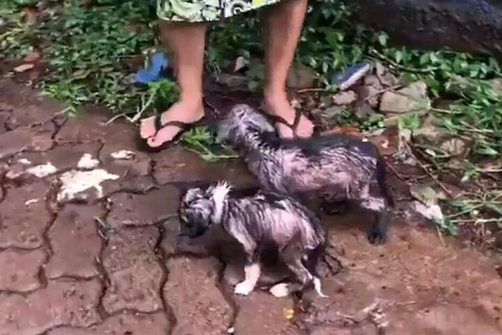 Eine Frau schützte die Hunde mit ihrem Schirm vor dem Regen.