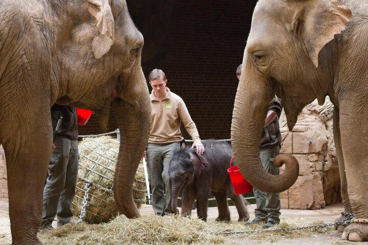Schritt für Schritt geht es voran im Elefantengehege.