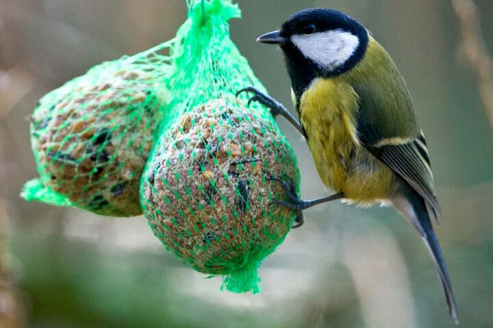 Die WGJ kümmert sich eigentlich rührig um Vögel, bringt eigens Nistkästen an.
