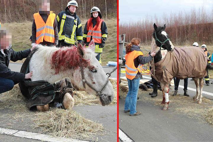 Offenbar wurden die Pferde bei dem Unfall doch leicht verletzt.