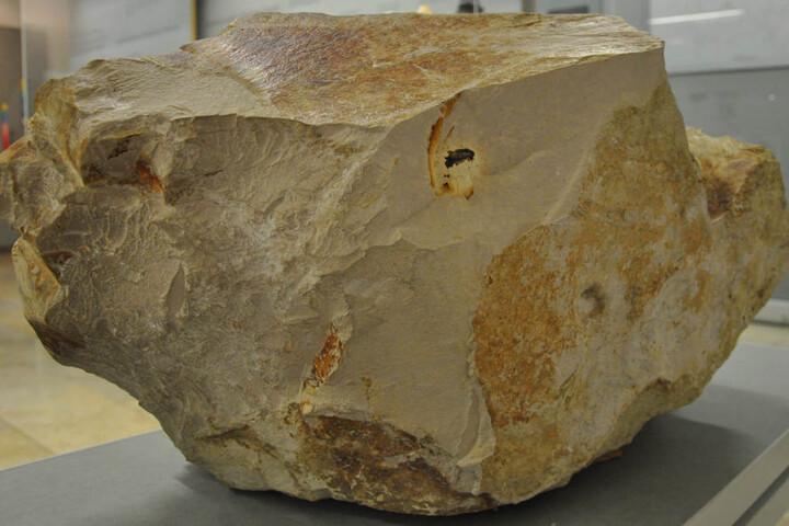 Der etwa einen Meter große Kalksteinblock mit Strahlenkegeln im Meteorkrater-Museum in Sontheim mit Resten des Steinheim-Meteoriten (dunkles Material oberhalb der Bildmitte), kurz nach dem Fund des Meteoriten.