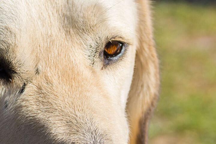 Mehrfach vergewaltigte Martin Carey seinen Hund (Symbolbild).