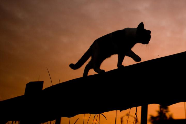 Die Katze weckte die Familie mit einem ungewöhnlich lautem Miauen und rettete sie somit vor den Flammen. (Symbolbild)