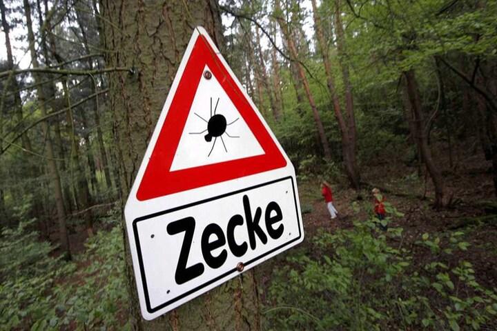 Ein Warnschild hängt an einem Baum im Wald bei Rodgau. Obwohl es draußen noch ungemütlich und kalt ist, sind Zecken in Brandenburg schon aktiv.