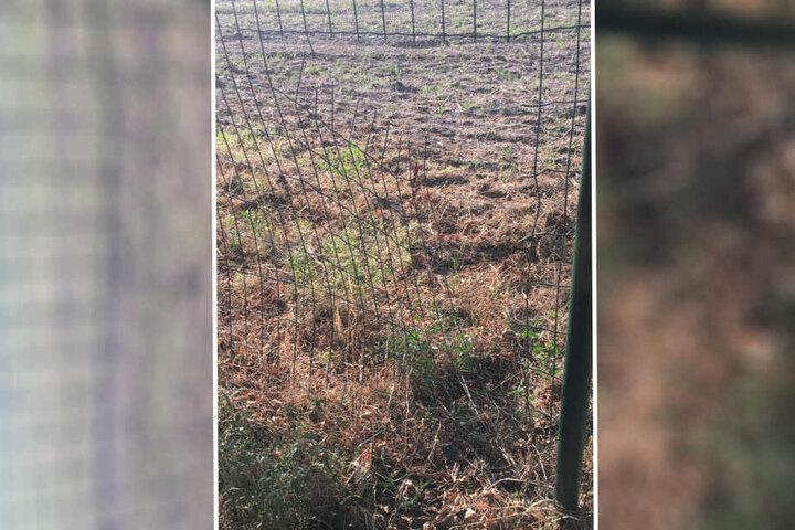 Das Loch hat der Hunde-Kidnapper in den Zaun geschnitten.