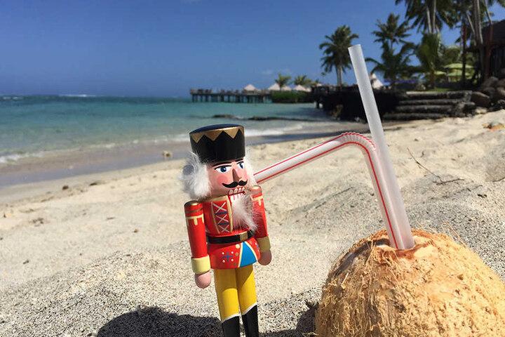 Bei der Begegnung mit einer Kokosnuss kam selbst der Nussspaltexperte ins  Staunen. Hier konnte er mit seinem hölzernen Mahlwerk nicht wirklich viel  anfangen. Jedoch ist die Weiterbildung ohnehin ein vorzügliches Privileg des  Reisenden.