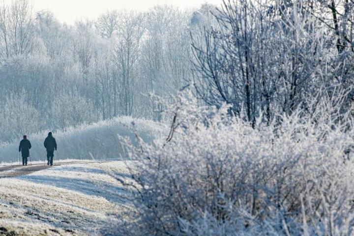 Spaziergänger gehen auf einem Weg zwischen mit Raureif überzogenen Bäumen in Kirchroth vorbei.