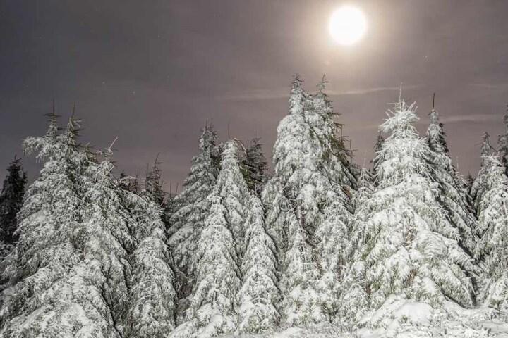 Eine schöne Schneedecke hat sich auf die Bäume auf dem Fichtelberg gelegt.