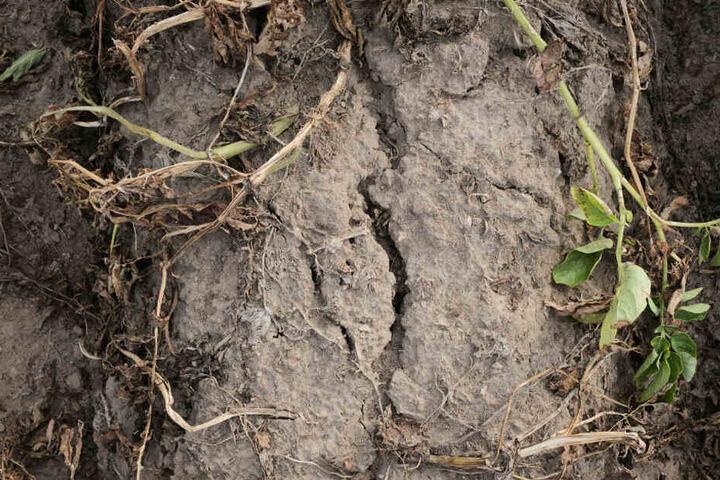 Sollte die Dürre anhalten, drohen große Ernteausfälle.
