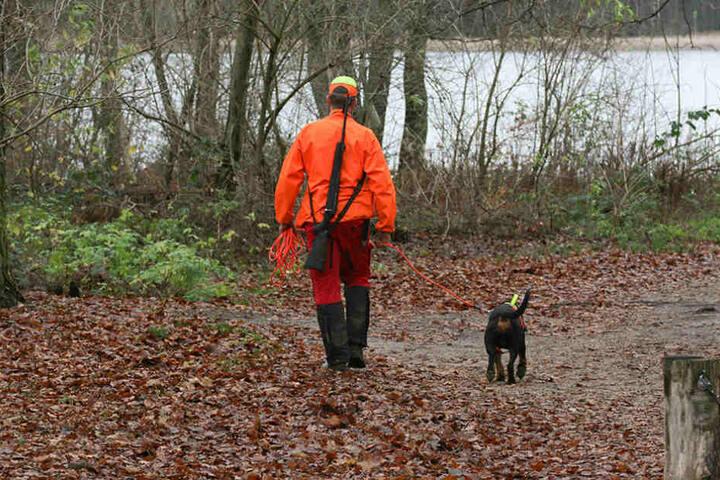 Feuer frei? Jagdverbände fordern Schießerlaubnis auf die geschützten Wölfe.