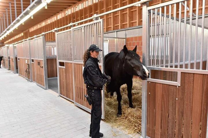 Ross und Reiterin in den neuen Stallungen in Stahnsdorf.