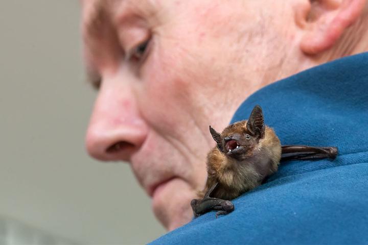 Wolfgang Kulick kümmert sich um die Fledermäuse.