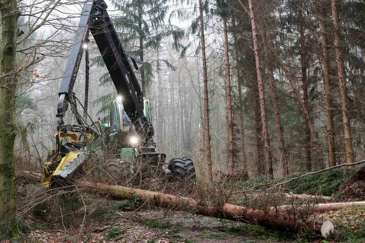Forstarbeiter beseitigen mit einem Harvester die Sturmschäden im Zellwald bei Freiberg.