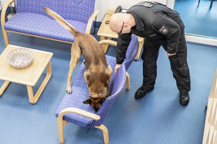 """""""Herr Rossi"""" im Einsatz: Die nordrhein-westfälische Polizei hat jetzt fünf Diensthunde in ihrer Staffel, die auch Handys und Datenspeicher erschnüffeln können."""