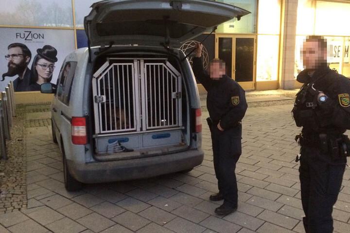 Beamte von Landes- und Bundespolizei sind mit Suchhunden vor Ort.