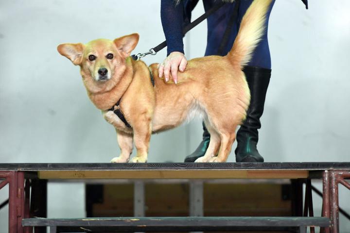 Auch dieser süße Mischling war unter den zehn Kandidaten beim Hundecasting.