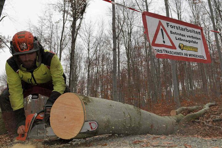 Ein Forstarbeiter blockiert die Straße mit einem Baumstamm am Burkhardtswald in Lauter.