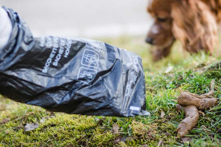 Ein Herrchen sammelt Hundekot mit einer Tüte auf. (Symbolbild)