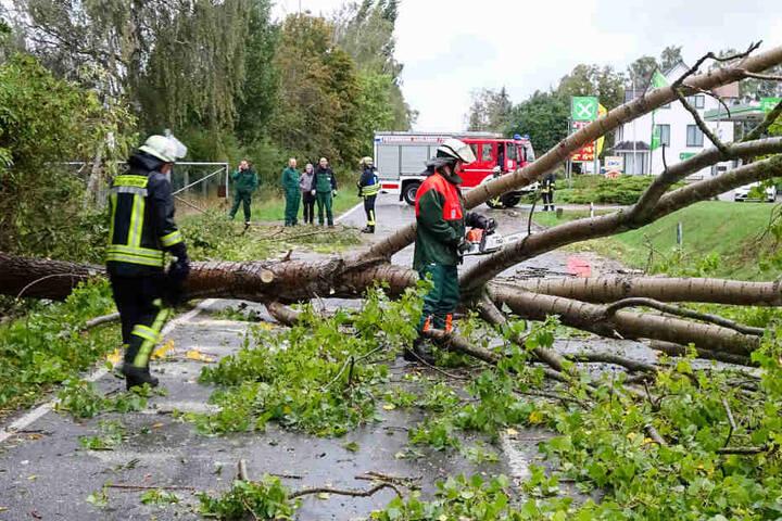 Feuerwehrleute beseitigen umgestürzte Bäume auf der L104 im Landkreis Börde in Sachsen-Anhalt. Gleich drei Bäume stürzten nacheinander auf die Fahrbahn. Ein weiterer Baum drohte zu entwurzeln und musste gefällt werden. Es wurde niemand verletzt.