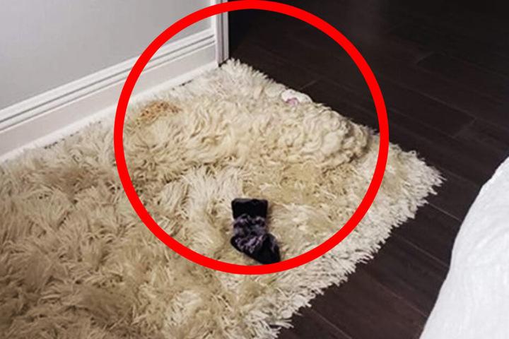 Schon auf dem ersten Foto war der Hund da.