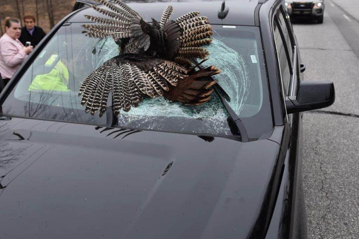 Das Tier überlebte den Unfall nicht, die Familie wurde leicht verletzt.