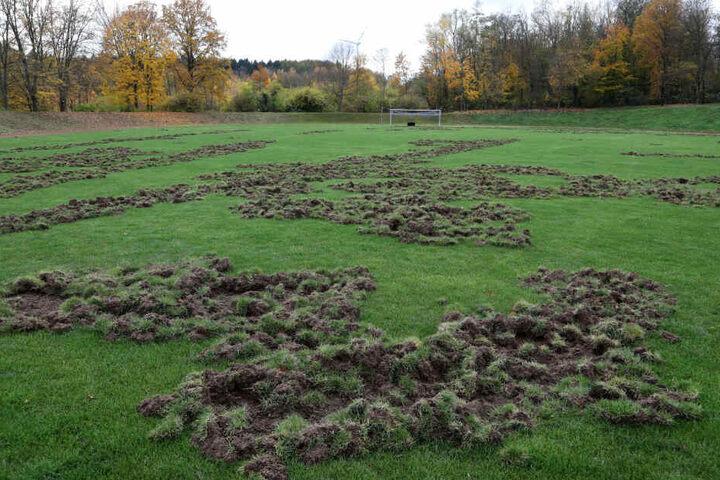 Der Rasen ist inzwischen nur noch ein Acker.